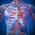 Патологии кровеносной системы