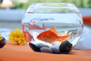 В доме есть аквариум